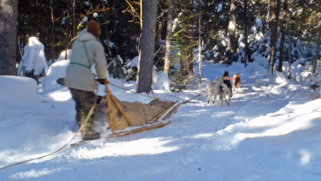 Dogsled Adventure: Winter Camping With Mahoosuc Guide Service