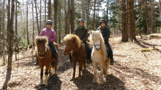Post-tölt smiles! Muffy, Barbara and Karen in the woods, the horses standing quietly for the picture taking. Icelandic Horses are particularly bred for their rideability (http://standard.iceryder.net/), a characteristic that is highly prized in the breed. (Shirley Bate photo)