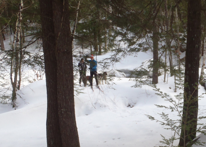 Where To Go Cross Country Skiing With Dogs